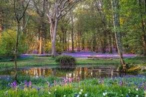 Arlington Bluebell Walk & Farm Trail