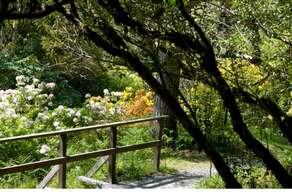 Crarae Garden National Trust of Scotland