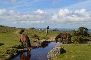 Dartmoor - The Heart of Devon