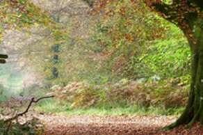Slindon Estate National Trust