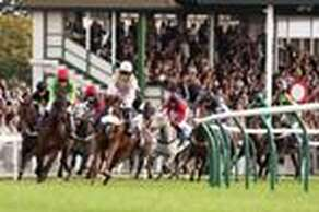 Fontwell Park Racecourse - Fontwell