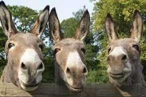sidmouth donkey sanctuary - EX10 0NU