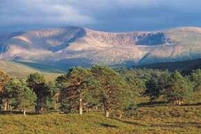 Visit the beautiful Cairngorms